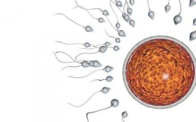 Tehotenstvo bez ejakulácie